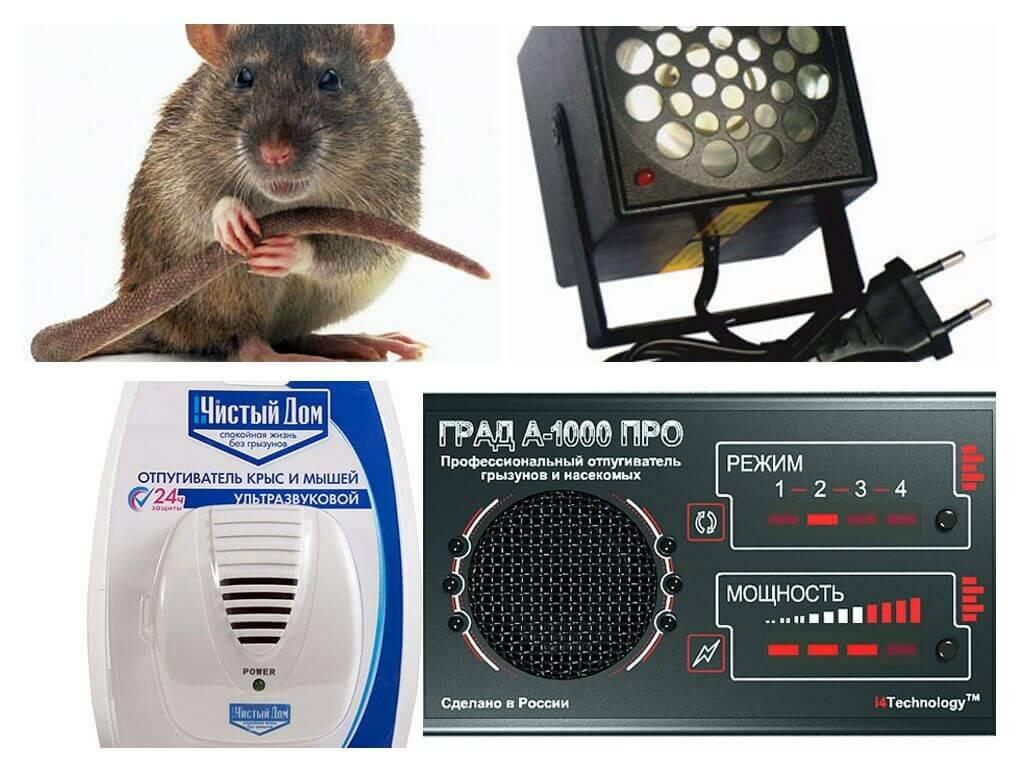 Самые эффективные средства от мышей