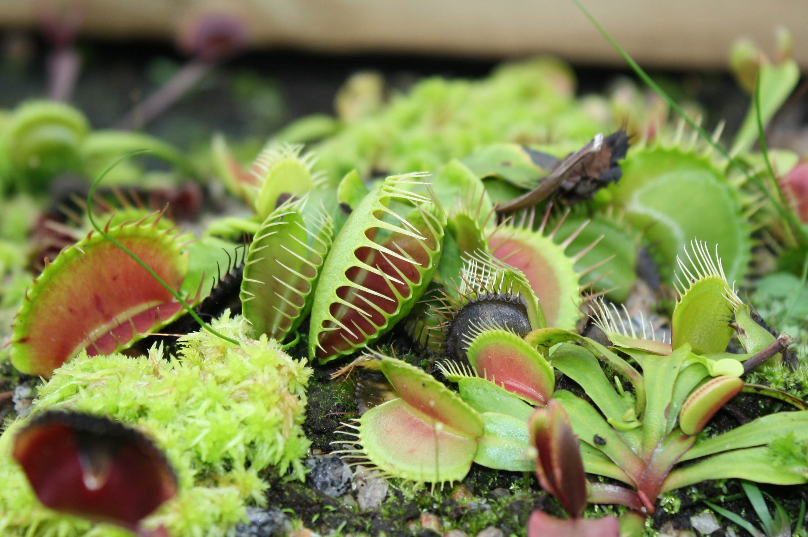 Какие растения отпугивают мух: уличные и домашние
