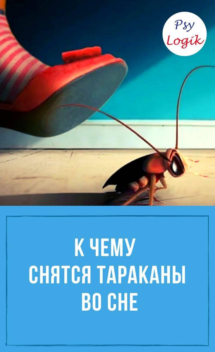 К чему снятся тараканы во сне ⇒ женщине, мужчине | толкование, сонник