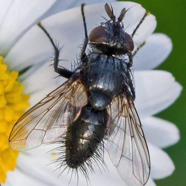 Класс насекомые. общая характеристика, строение, размножение, разнообразие и значение насекомых | биология