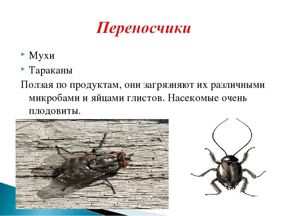Чем опасны тараканы: какой от них вред и какие болезни переносят