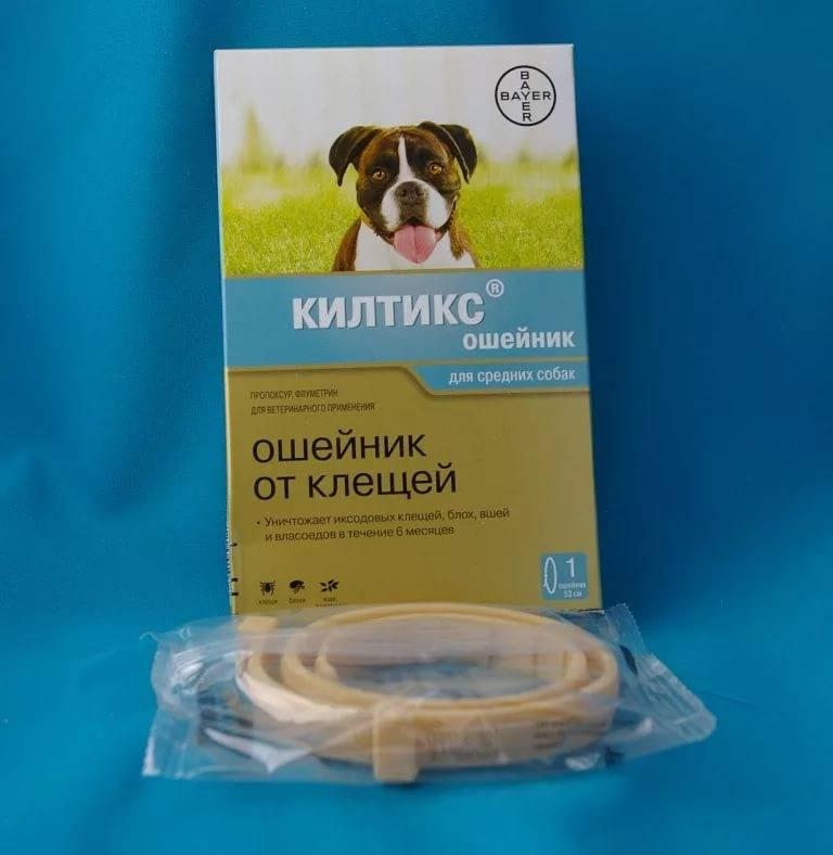 Средство от блох для собак: обзор лучших и эффективных препаратов