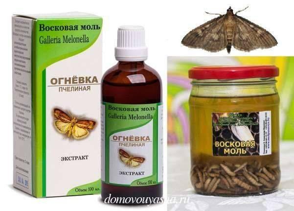 Пчелиная моль - настойка и применение