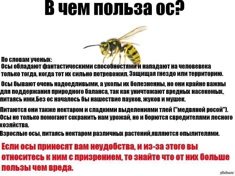 ✅ что делают осы и зачем они нужны в природе, какую пользу приносят, вред от ос, опыляют ли растения - tehnoyug.com