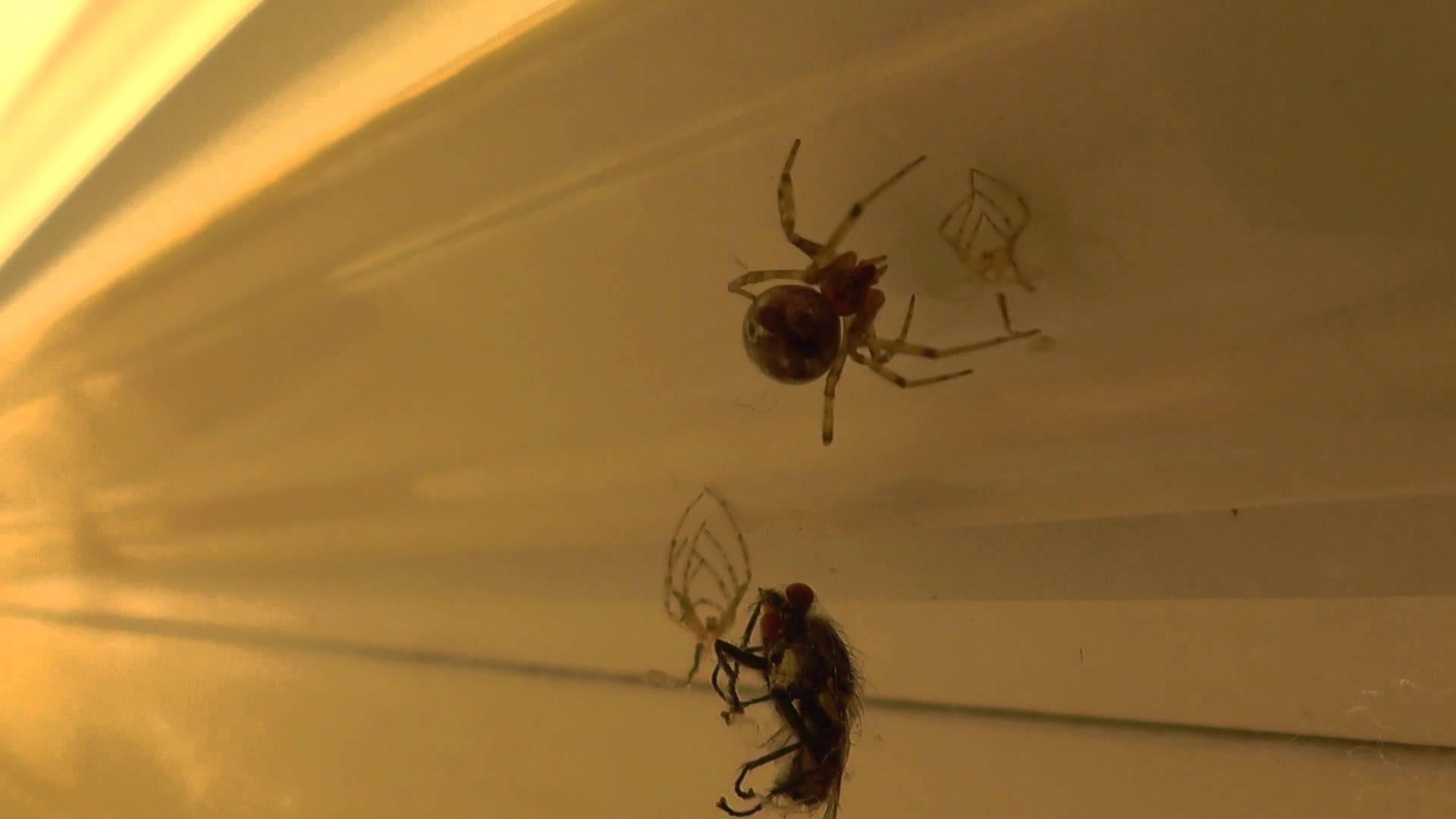 Как избавиться в доме от пауков доступными средствами?