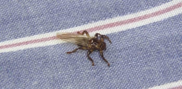 Чем опасны вши для человека на голове: переносимые вшами заболевания и вред от насекомых