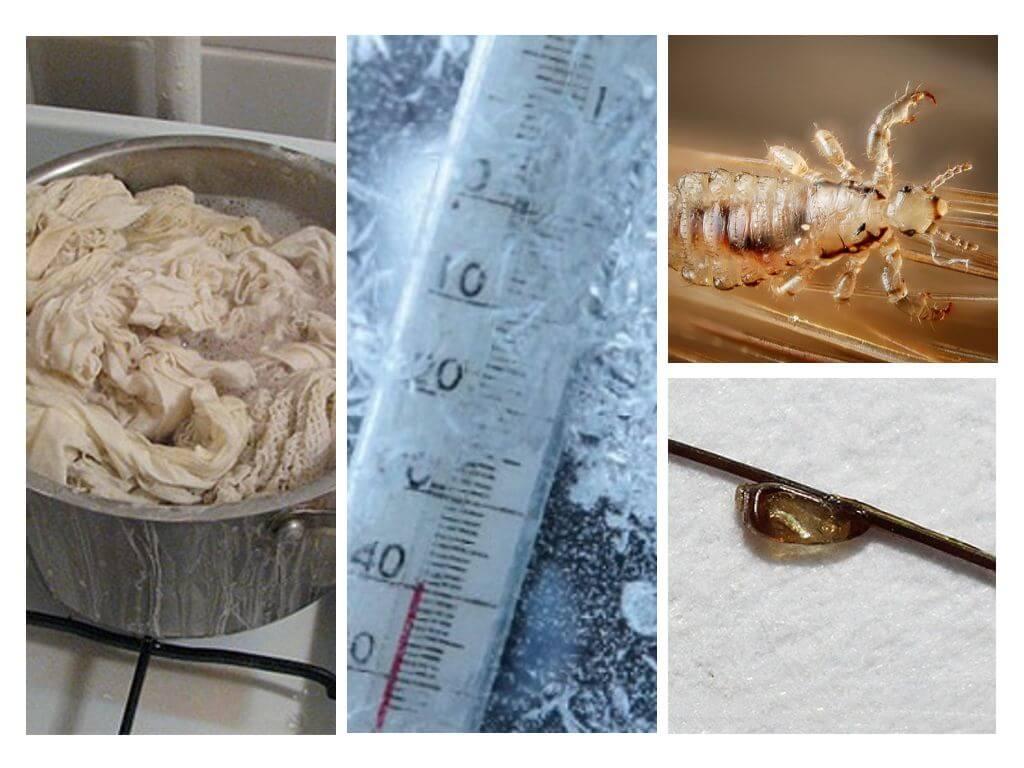 При какой температуре погибают вши и гниды: влияние мороза и жары