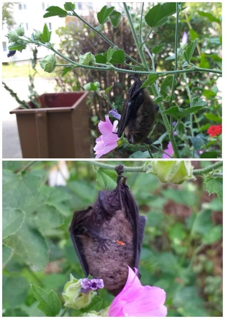 Как избавиться от летучих мышей в частном доме или квартире?