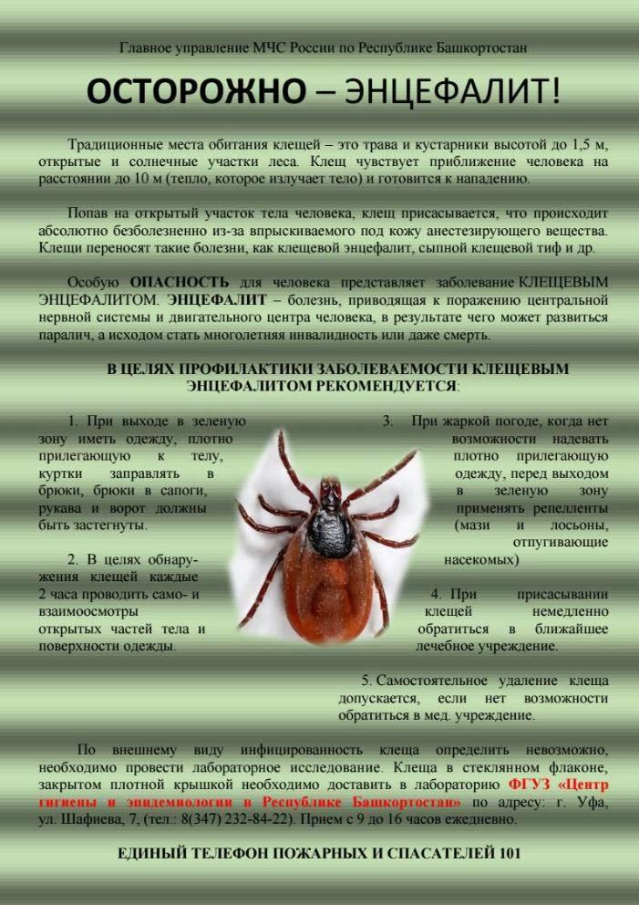 Вирус клещевого энцефалита: симптомы, диагностика, лечение