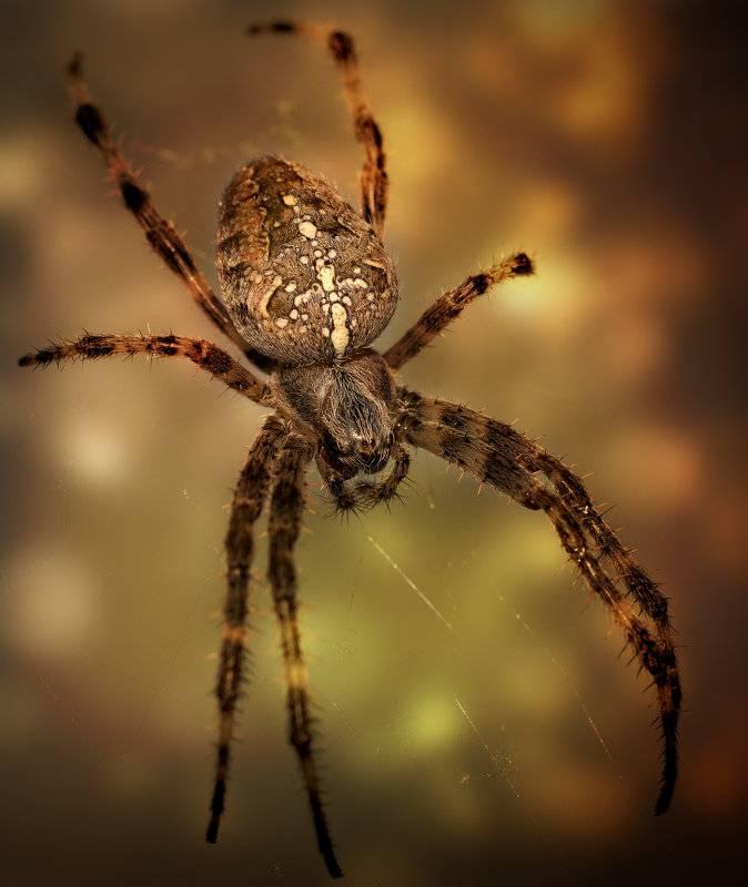 Виды пауков в россии: безвредные и опасные для человека особи