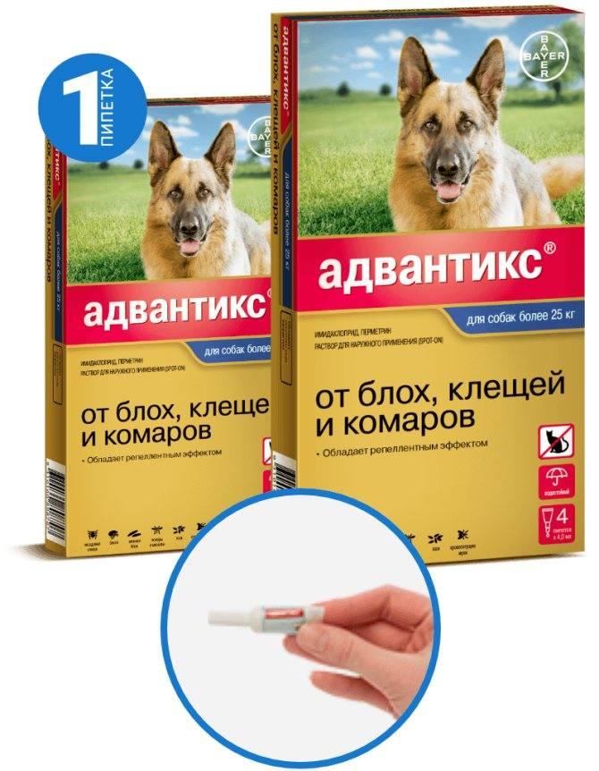Инструкция препарата адвантикс для защиты собак от блох и клещей