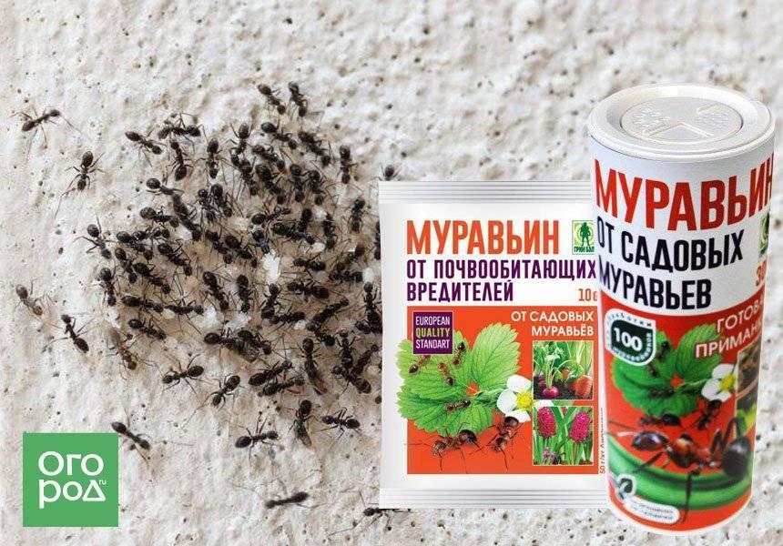 Как выбрать лучшее средство от муравьёв в доме