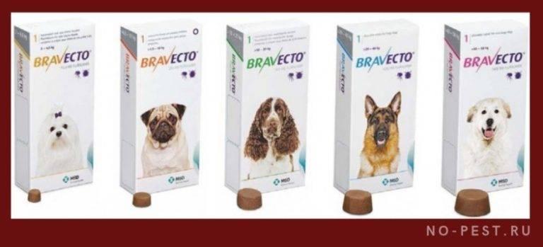Самые эффективные и лучшие капли от клещей для собак