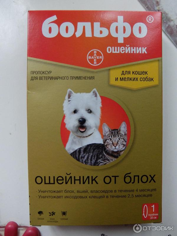Ошейник от блох для собак: плюсы и минусы, разновидности.