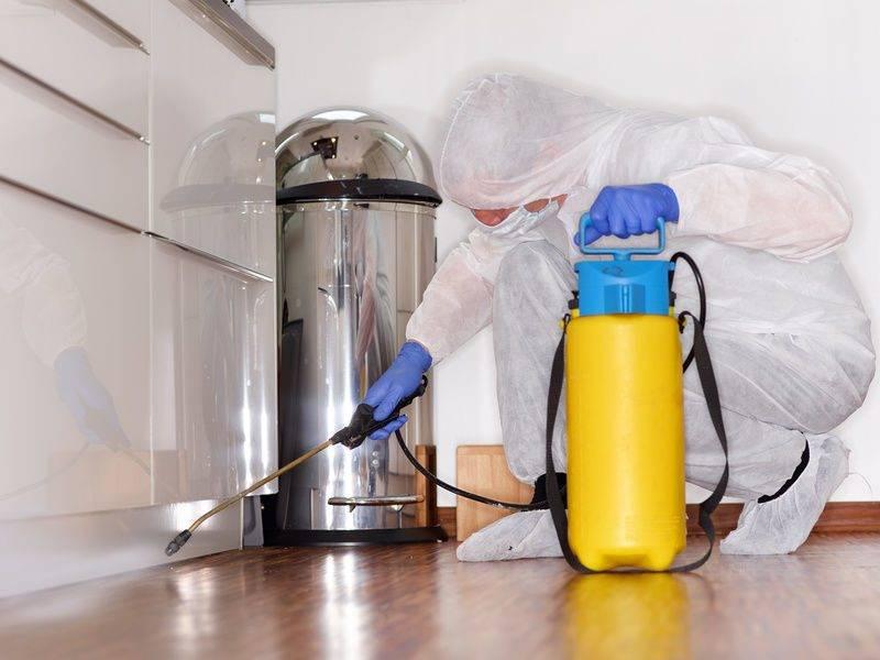 Запах после дезинфекции - причины появления, способы выведения запаха