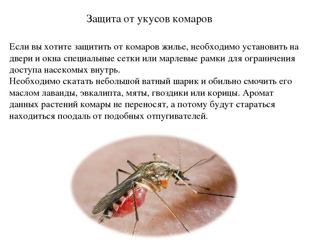 Опасные и ядовитые насекомые таиланда: мухи, москиты, сколопендры и другое(фото)