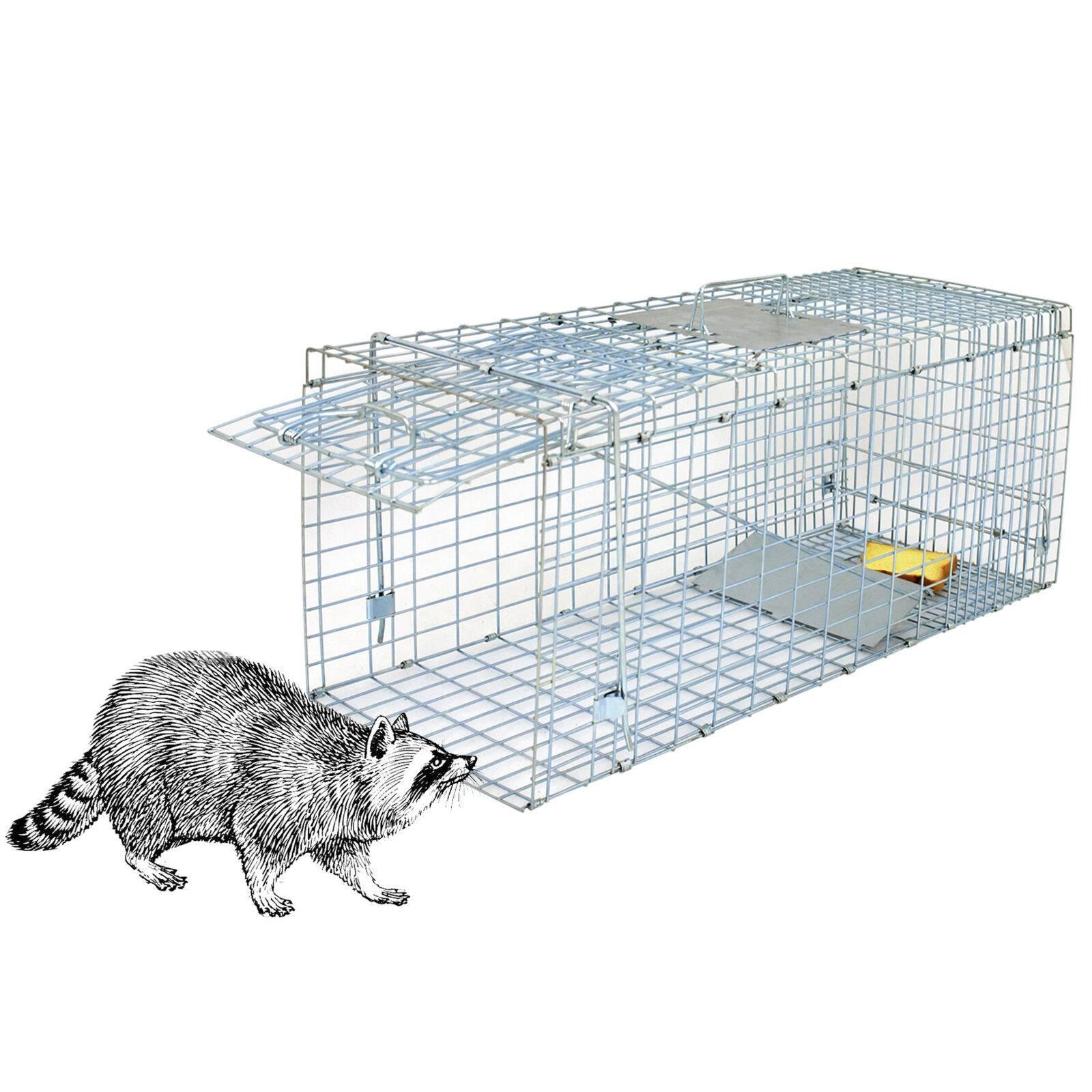 Как сделать ловушку для крыс: 110 фото лучших самодельных крысоловок