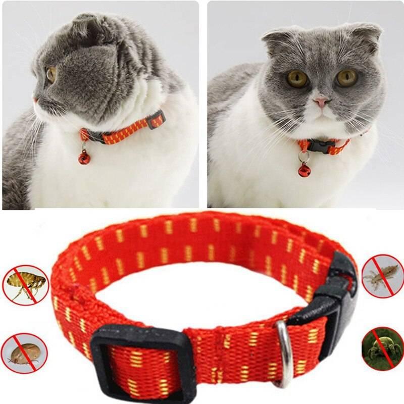 Ошейник от блох и клещей для кошек и котят: отзывы, правила применения