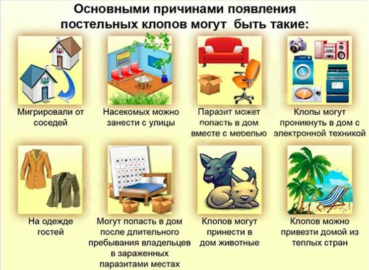 Клопы в квартире: причины появления, опасность для человека