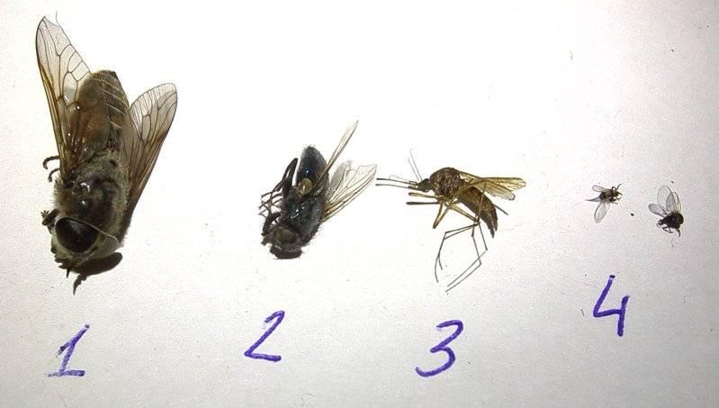 Как избавиться от мошек в квартире: 3 самых эффективных способа. откуда появляются мошки в квартире. ловушки для мошек
