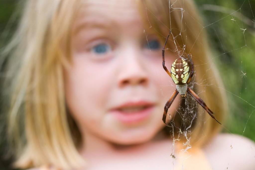 Арахнофобия что это такое, причины, как избавиться от боязни пауков
