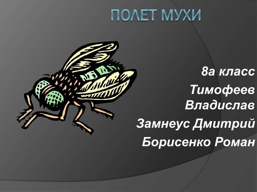 Откуда берутся мухи и чем они питаются. чем питаются разные виды мух