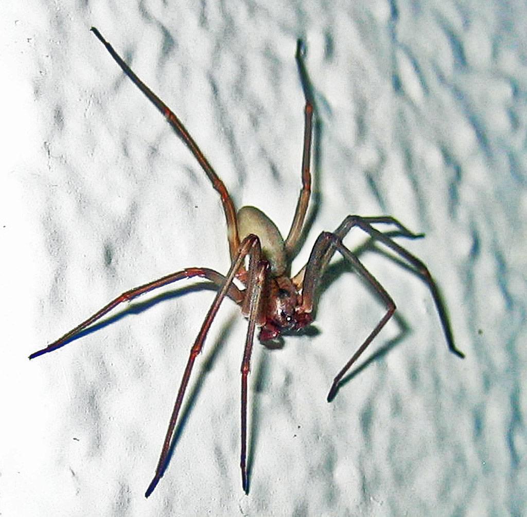 Что делать, если укусил каракурт или другой паук, как выглядят укусы (фото) и чем они опасны, последствия, первая помощь