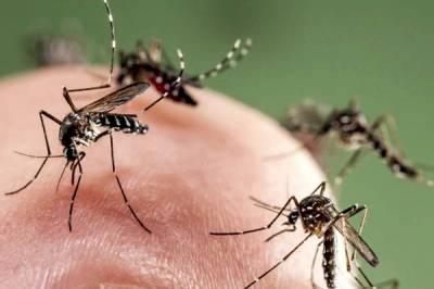 Укусы комаров вред и польза