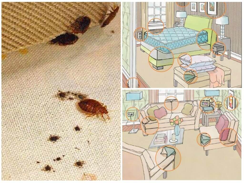 Как быстро обнаружить постельных клопов в квартире. как узнать есть ли клопы в квартире