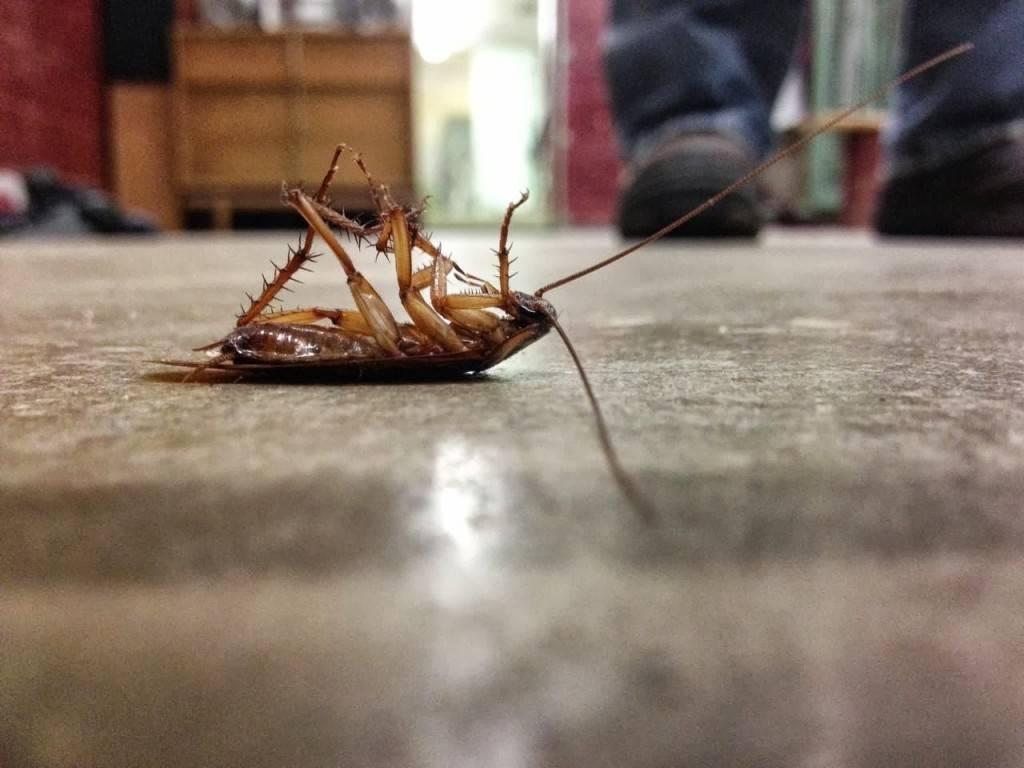 Мелок машенька от тараканов: как действует, способы применения