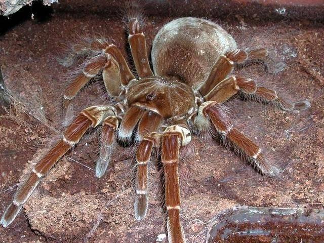 Топ 10 самых опасных пауков мира - топ 10 мира