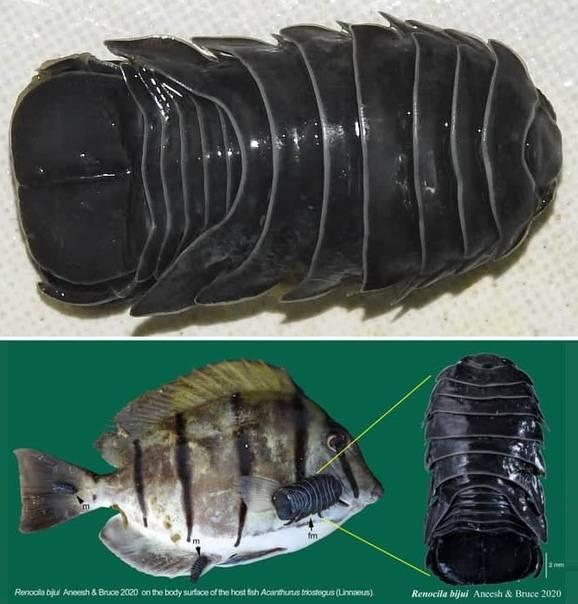 Как выглядят мокрицы и их личинки, где живут и чем питаются