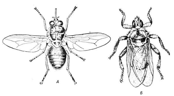 Скорость мухи, как летает муха - читайте!