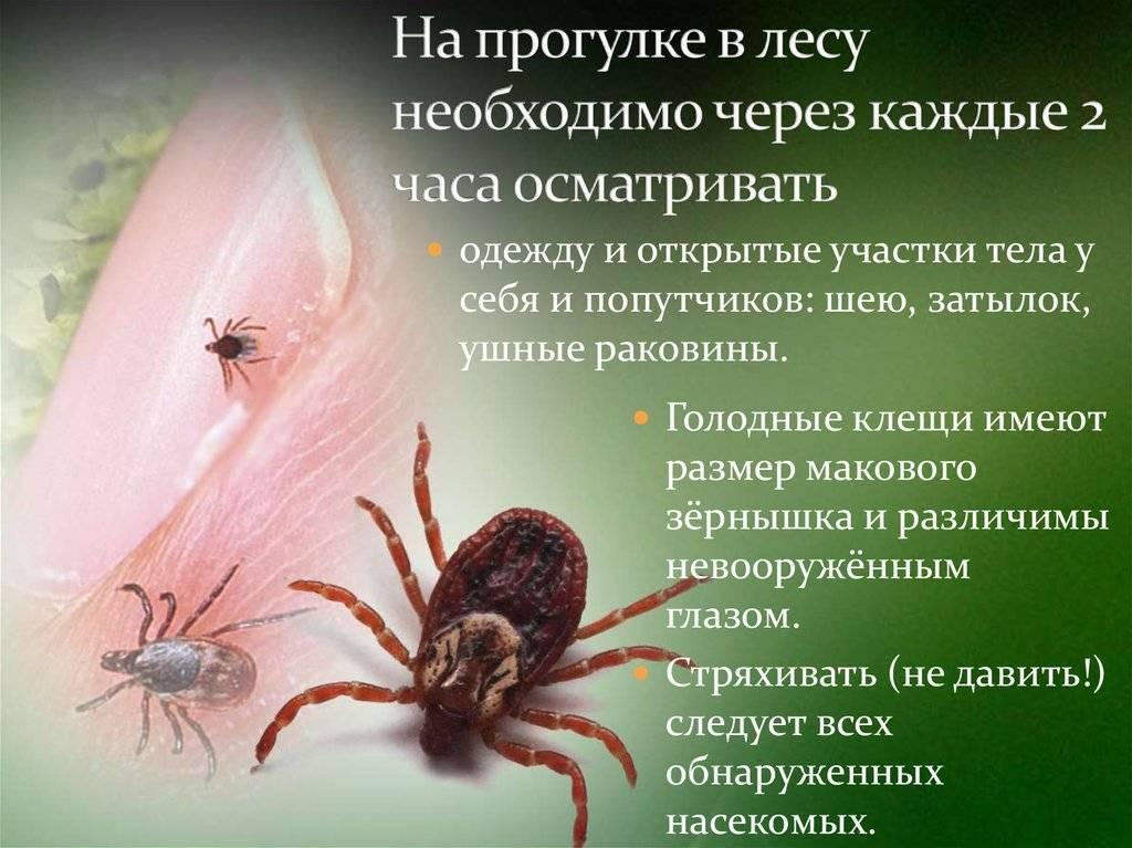 Всё о таёжных клещах: как защититься от клещевого энцефалита и других заболеваний, переносимых этими паразитами