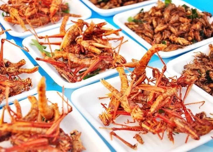 Топ-10 самых вкусных насекомых