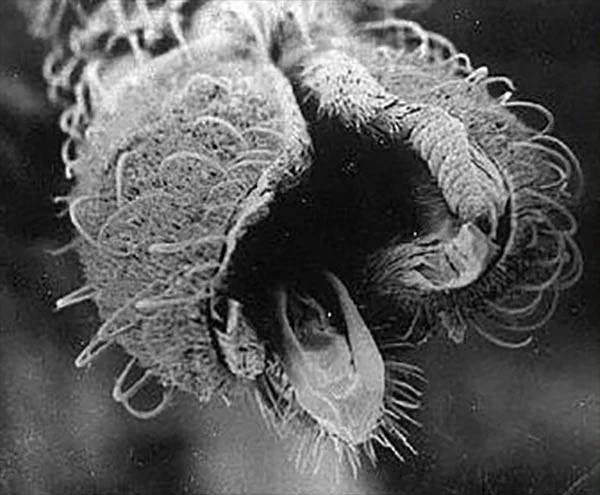 Есть ли зубы у комаров?  - животные и растения - вопросы и ответы