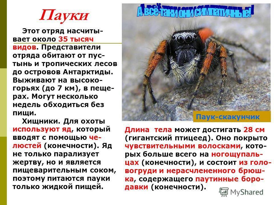 Значение пчел в природе и жизни человека, их основная роль