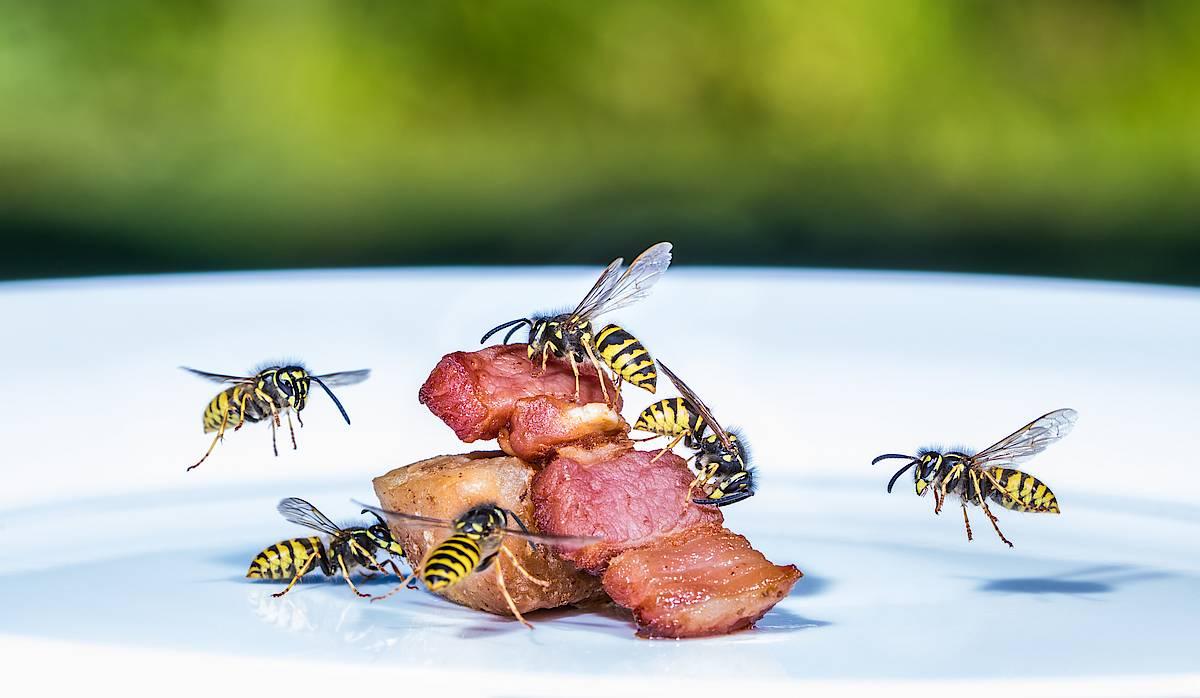 Чем питаются пчелы в дикой природе и домашние в хозяйстве