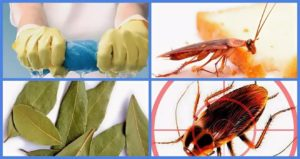 Как избавиться от тараканов в квартире раз и навсегда