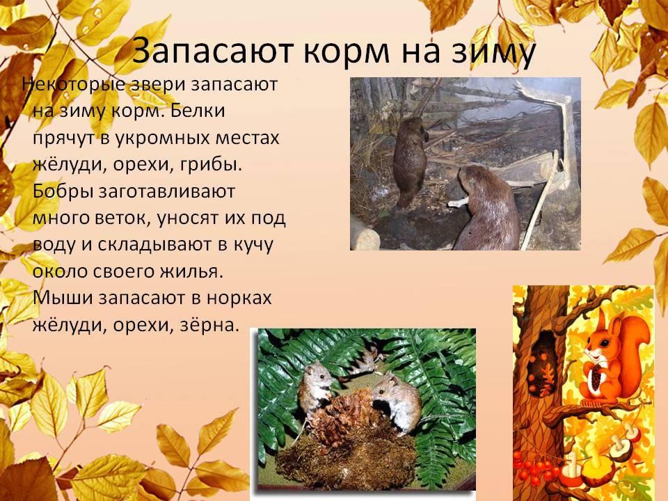 Животные которые впадают в спячку зимой: описания и фото
