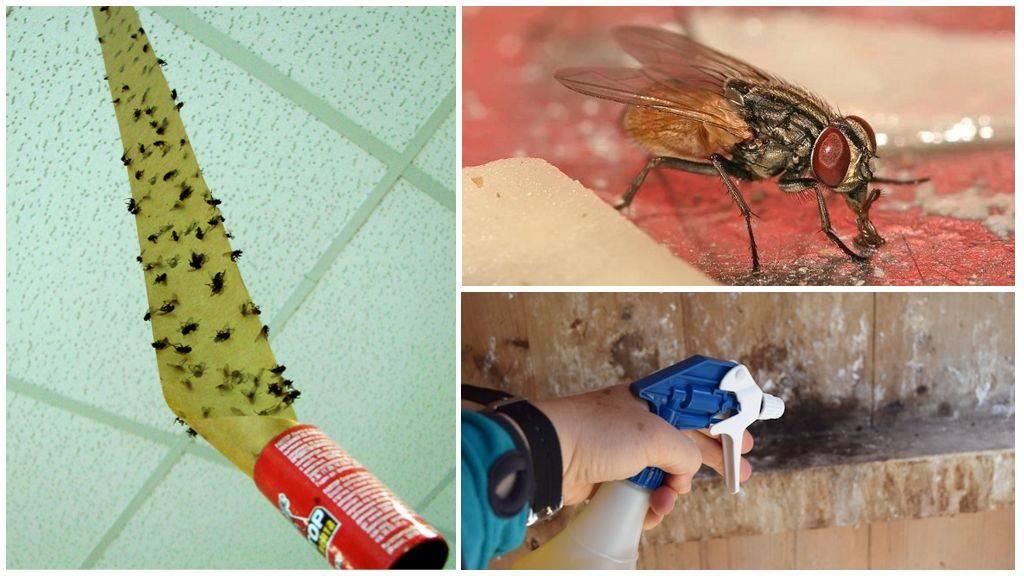 Как избавиться от мух в квартире - 9 работающих способов и в доме дышится легко!!!