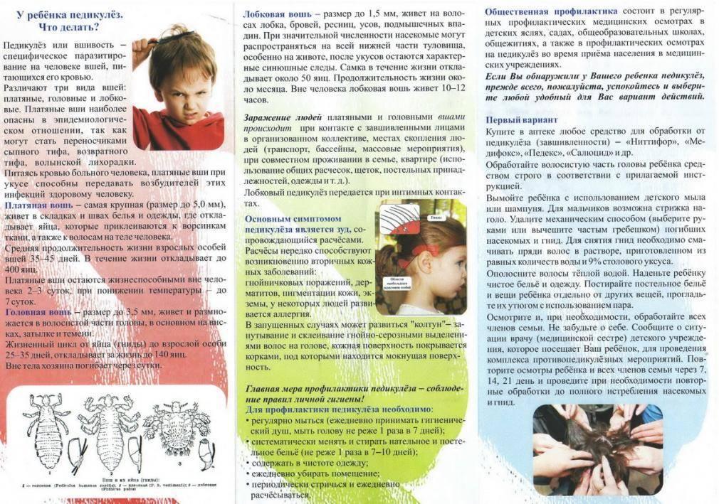 Профилактика педикулеза   меры профилактики вшей у детей и взрослых профилактика педикулеза   меры профилактики вшей у детей и взрослых