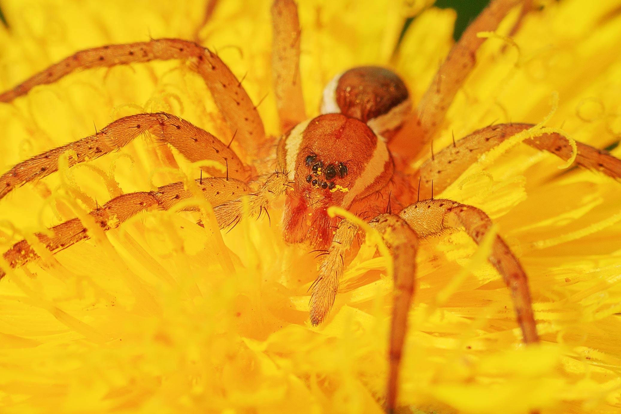Не для арахнофобов: какие пауки обитают в столице