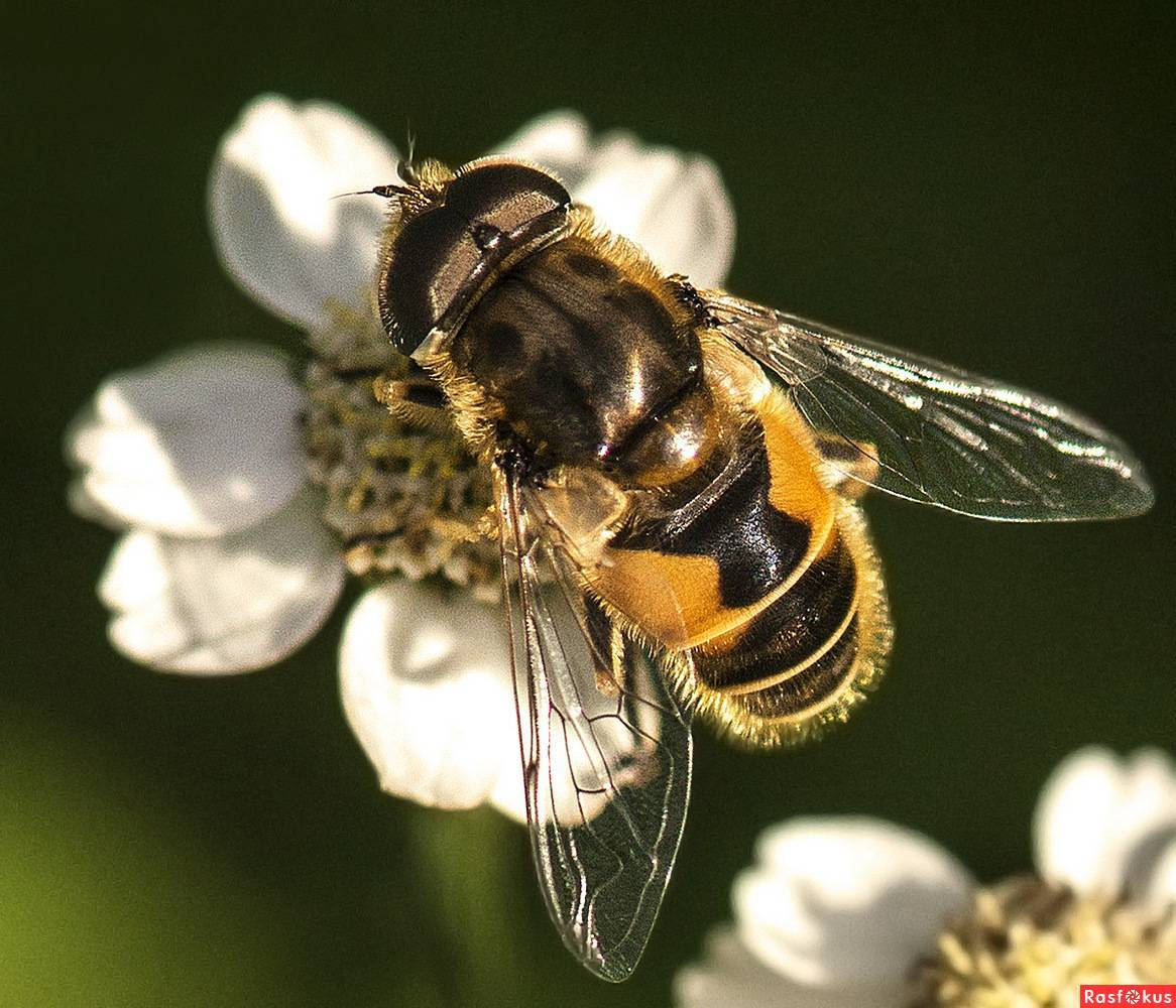 Зачем нужны в природе мухи, вред и польза