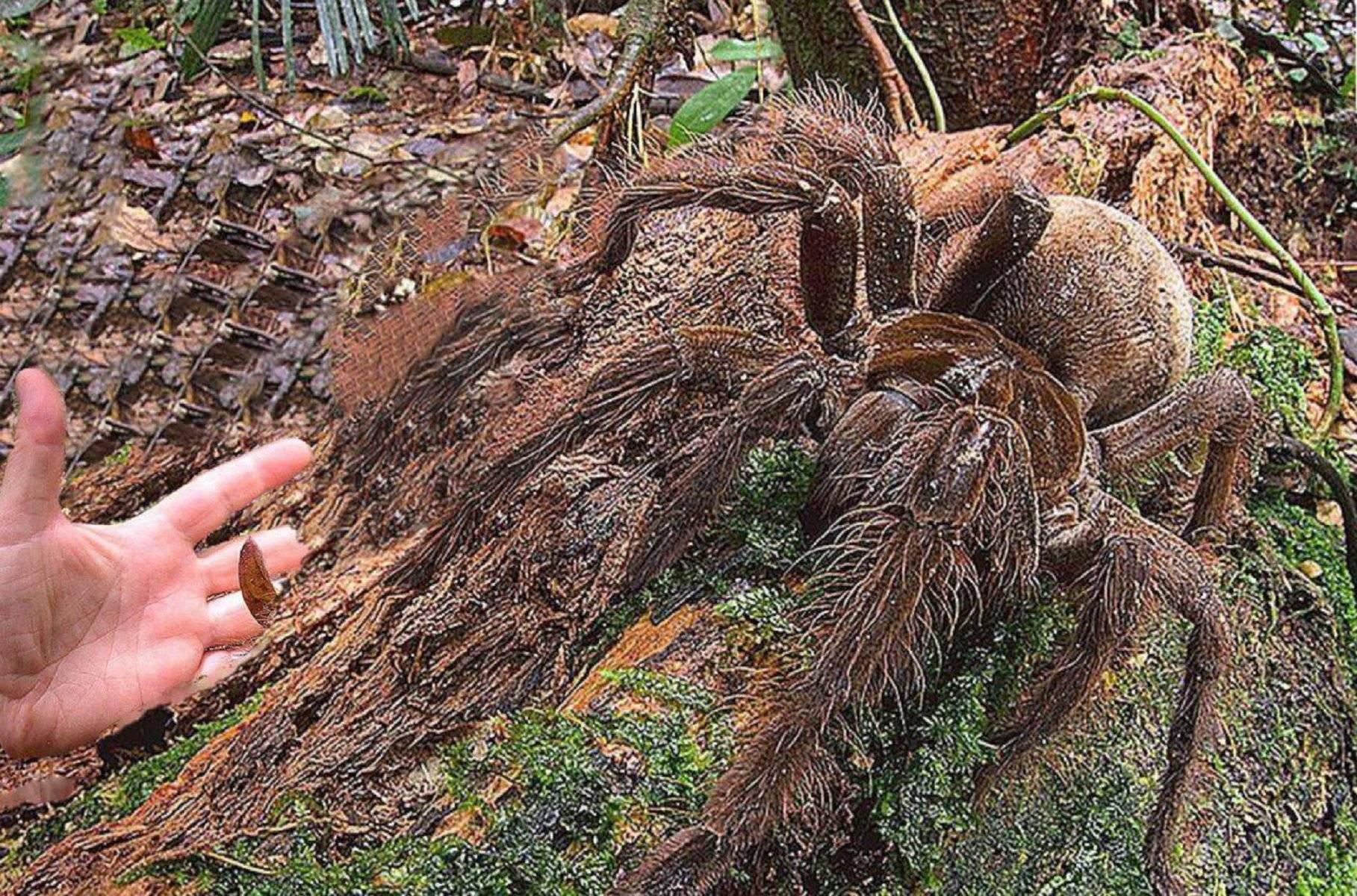 В россии открыт новый вид самого страшного паука в мире - hi-news.ru