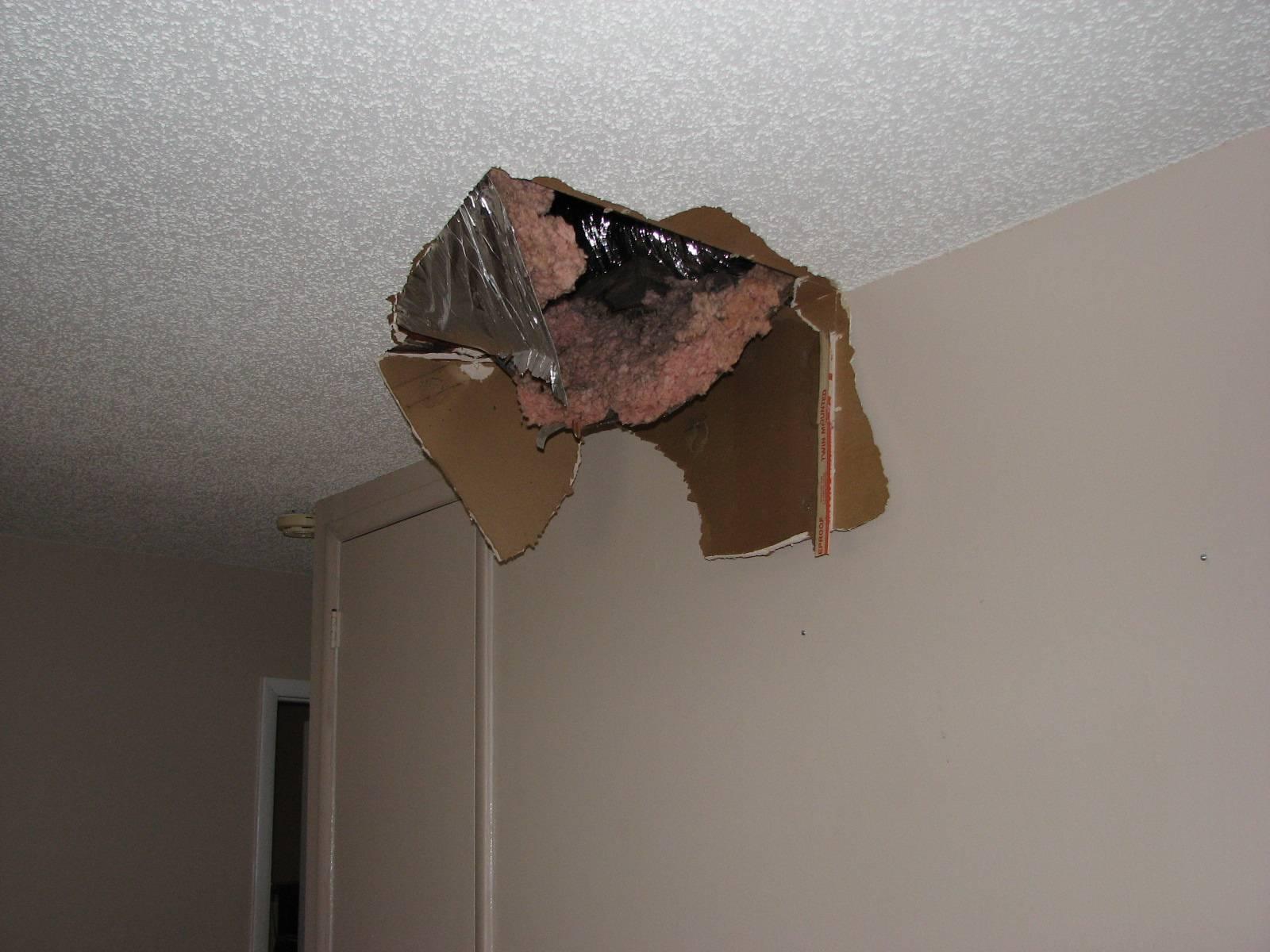 Мышь в натяжном потолке что делать