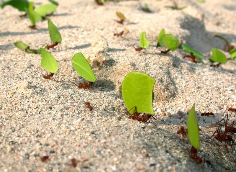Кто ест муравьев. враги муравьев или кто их ест   дачная жизнь