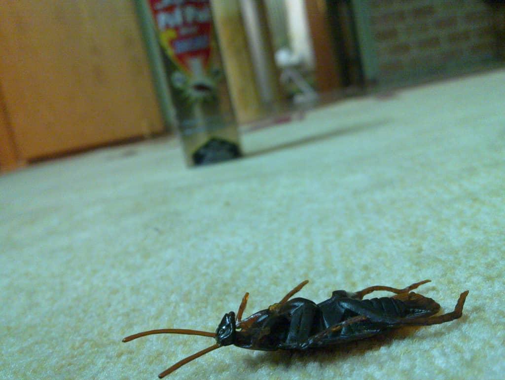 Откуда берутся большие черные тараканы в доме, как избавиться от них