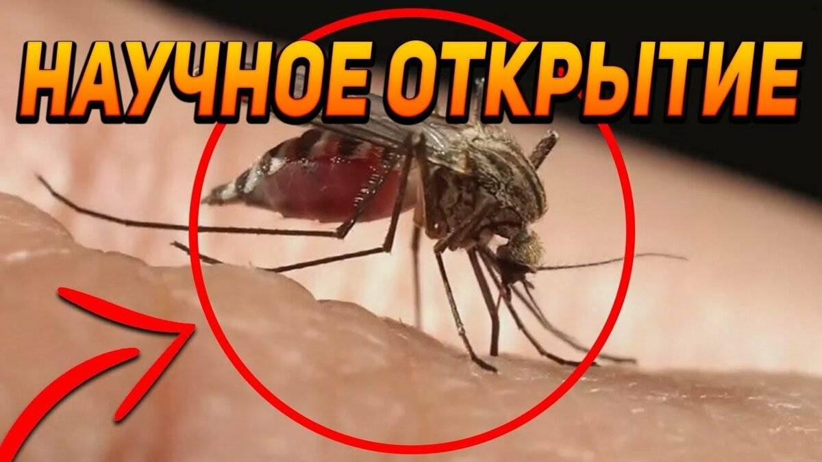 Зачем нужны мухи в природе – читайте!
