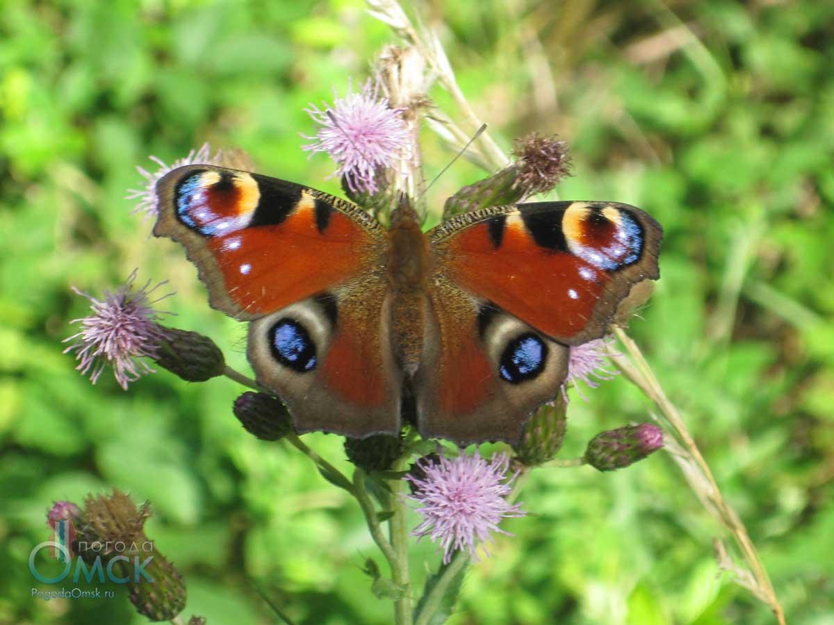 Бабочка - фото и видео яркого представителя мира насекомых. описание, виды, жизненный цикл